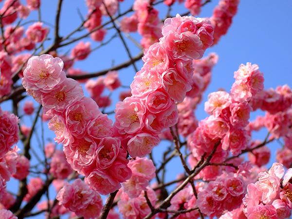 春近し リシャフトしよう!